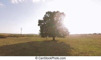 Sammer Tree Backlit