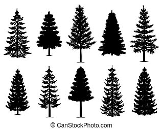 sammlung, bäume, tanne, kiefer