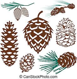 sammlung, pinecone