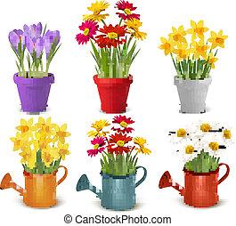 sammlung, von, fruehjahr, und, sommer, farbenfreudige blumen, in, töpfe, und, bewässerung, can., vektor
