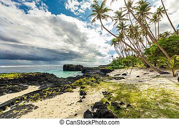 samoa, wyspa, drzewa, ocean, tropikalny, dłoń, popołudnie, podczas, plaża