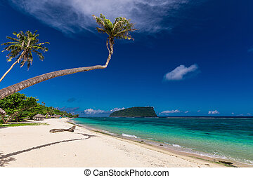 samoa, wyspa, drzewa, tropikalny, lalomanu, dłoń plaża