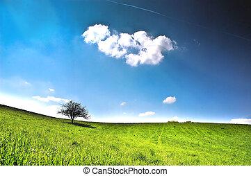samotny, drzewo, łąka