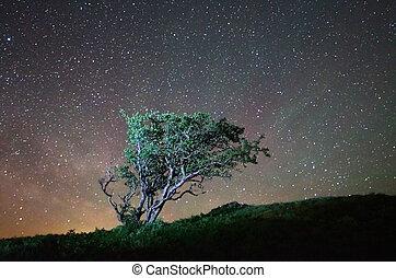 samotny, drzewo, noc