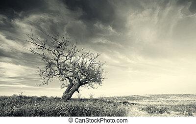 samotny, drzewo