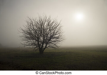 samotny, w, przedimek określony przed rzeczownikami, mgła