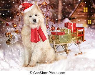 Samoyed dog in a hat of Santa