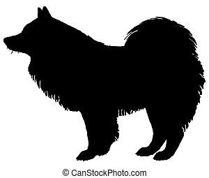 samoyed, silhouette, chien, noir