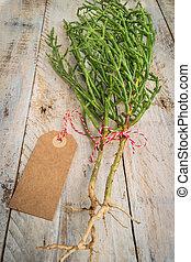 Samphire coastal vegetable