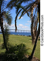 San Diego - The Coronado Bridge as seen through palm trees,...