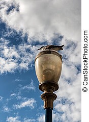 San Francisco Street light and seagull