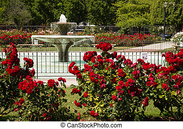 San Jose Rose Garden - Landscape of fountain surrounded by...