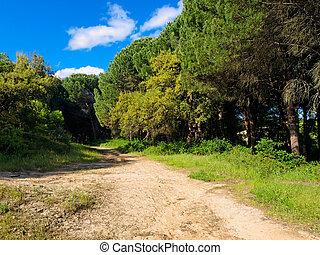 san, rey, dennenboom, del, bos, roque, groene, pinar, andalusia