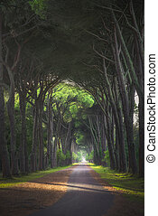 San Rossore park, footpath in pine tree misty forest or ...
