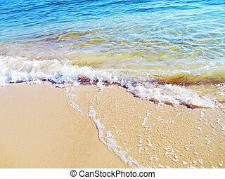 Sand and sea; the clear calm waters of the Gulf of Mexico wash the Florida beach.