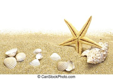 sand and seastar border - beach sand, shells and seastar...