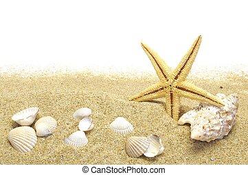beach sand, shells and seastar border on white