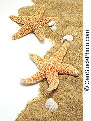 sand and seastar border - beach sand, shells and seastar ...