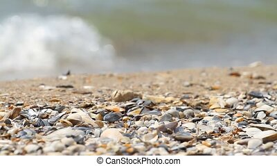 Sand and shells on the background of sea
