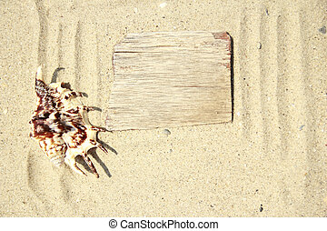 Sand background  and shell on the beach