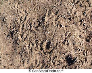 sand. background