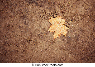 Sand background with autumn leave