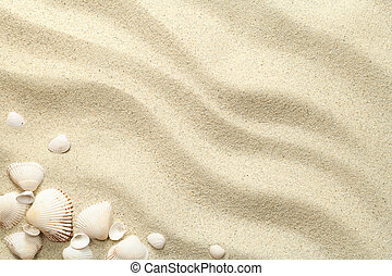 Sand Background with Shells