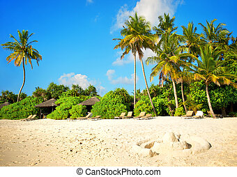 sand beach with palm trees and blue sky