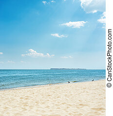 sand beach with seagull and sea with island on horizon under blue sky with clouds