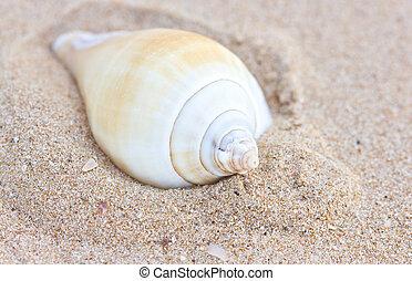sand., cáscara, mar