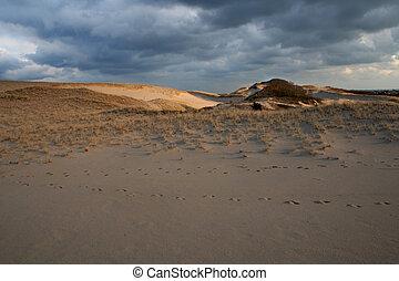 Sand Cape Cod