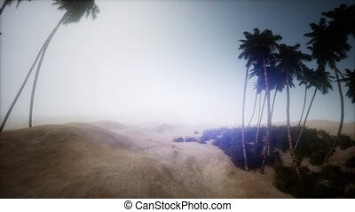 sand desert with palms at sunset