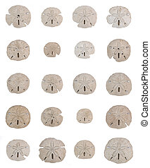 Sand dollar sea shell collage in grid pattern over white -...