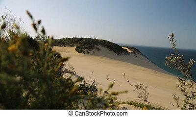 Sand Dune And Beach Trees, Qld Island, Australia