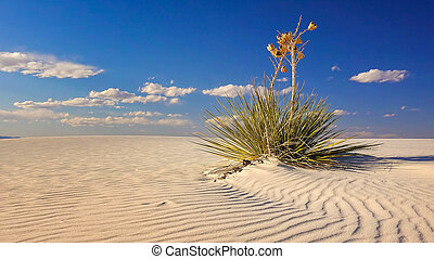 Sand Dune and Yucca at White Sands National Monument, New...