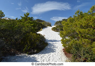 Sand dune - Coastal sand dune