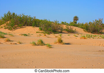 Sand dune - Golden sand dune in the afternoon light
