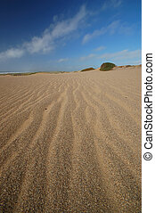 Sand Dune on the beach