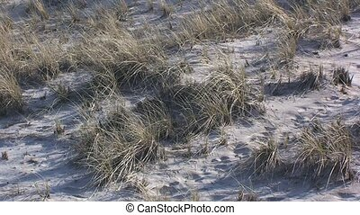 Sand Dune Plants at the Beach