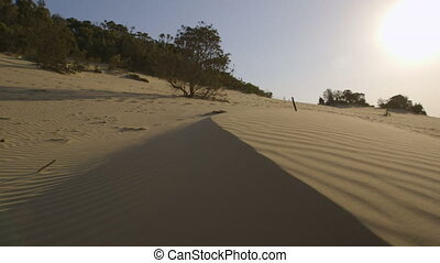 Sand Dune Ridge, Qld Island - Medium tilting shot of coastal...