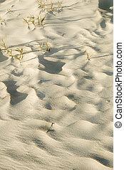Sand dune ripples