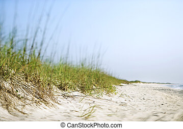 Sand dune. - Sand dune with grass at the beach.
