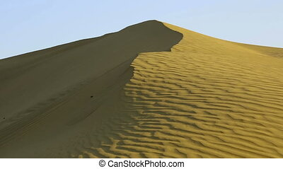 Sand dune. - Scarab crowling on the sand dune in the Thar...