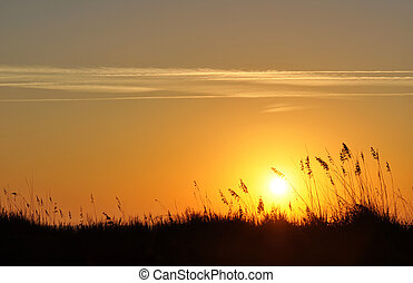 Sand dunes and sea oats silhouette in a morning sunrise.