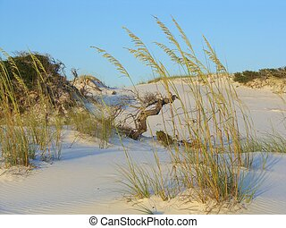 Sand Dunes and Sea Oats - Afternoon sunshine on the sand...
