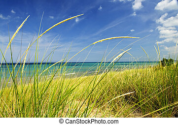 Sand dunes at beach - Grass on sand dunes at beach. Pinery ...