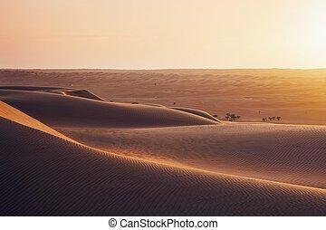 Sand dunes at sunset