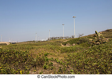 Sand Dunes Covered in Natural Vegetation with Clear Blue Sky