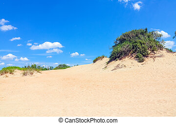 sand dunes covered with greenery against a blue sky
