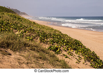 Sand Dunes Covered with Vegetation overlooking sea